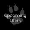Upcoming Litters